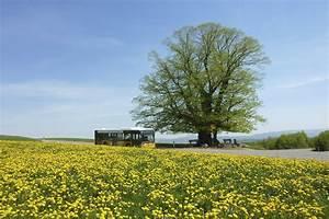 Einverständniserklärung Verwendung Von Fotos : bilder zur verwendung jurapark aargau ~ Themetempest.com Abrechnung