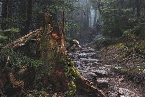 forest, Tree stump, Path, Rock, Mist Wallpapers HD ...