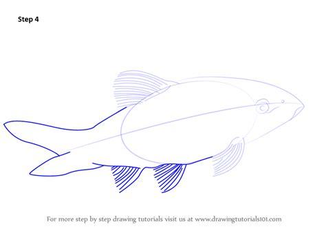learn   draw  clown loach fishes step  step