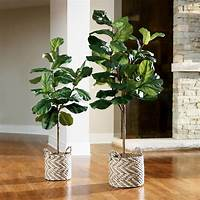 fiddle fig tree Fiddle Leaf Fig Tree | Grandin Road