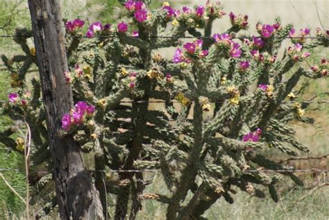 road   mexico cactussucculant flowers forums