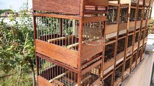 gabbie per canarini da canto gabbie in legno per canarini da canto posot class