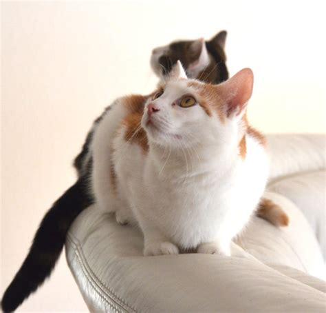 Epilepsie Katze Medikamente