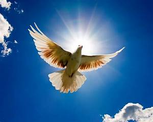 Doves images Dove HD wallpaper and background photos ...