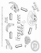Coloring Tadpole Pages Fiesta Printable Desert Landscape Plants Animals Cycle Getcolorings Getdrawings Colorings sketch template