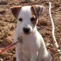 dallas fort worth tx puppy training redeeming dogs