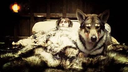 Thrones Bran Summer Wolf Stark Direwolves Direwolf