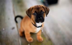 awesome dog - Dogs Picture