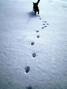 13 best images about Maine Animal Tracks on Pinterest ...