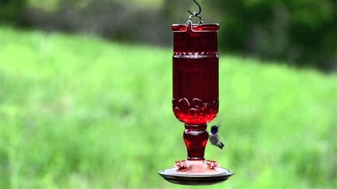 Perky-pet® Red Antique Bottle Glass Hummingbird Feeder How To Antique Furniture Ebay Lamps Table Queen Anne Wing Chair Lace Tablecloth Mahogany Dining Chairs Best Way Clean Dirty Bottles Oil Paintings For Sale