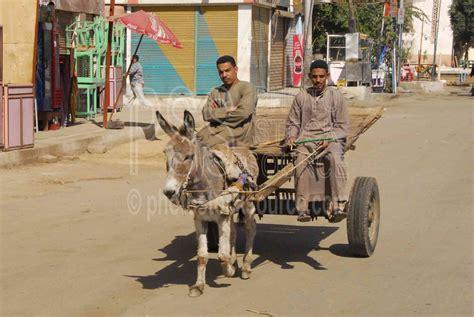 photo  donkey cart  photo stock source people edfu