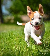 Running Dogs Cute Puppies
