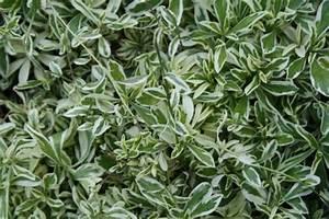 Pflanzen Für Trockene Schattige Standorte : steingarten pflanzen f r schattige pl tze hausidee ~ Michelbontemps.com Haus und Dekorationen