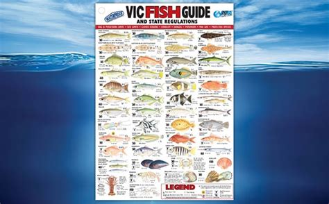 buy afn canvas fish guide northern territory cm