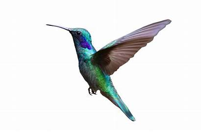 Bird Hummingbird Flying Transparent Background Colorful Clipart