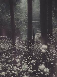 Enchanted forest   Nature, Photography, Nature photography