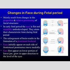 Development Of The Face, Oral Cavity & Pharyngeal Arches