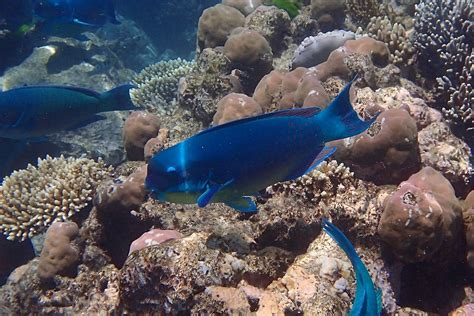 snorkeling reef norman