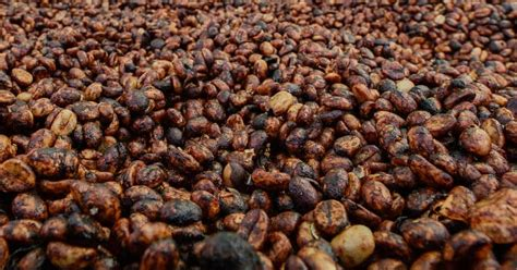 Honey process coffees originated in costa rica as a new, experimental form of processing to cut down on red honey process coffees are the perfect middle ground between the washed and natural processes. Honey | Coffee Processing | BrewersClub