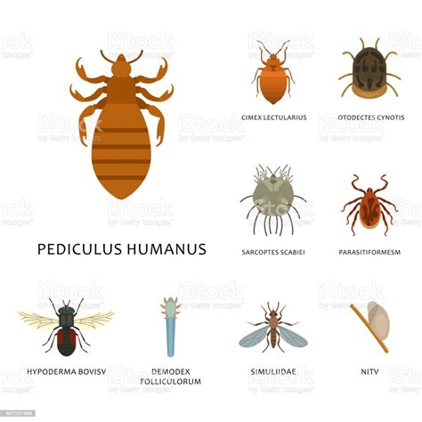 human skin parasites vector housing pests insects disease