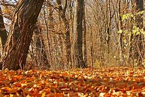 Yellow, Autumn, Leaves, In, Forest