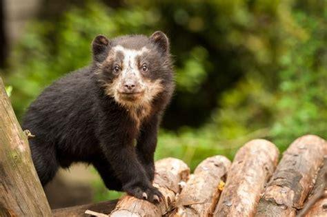 Paddington Bear Real Life