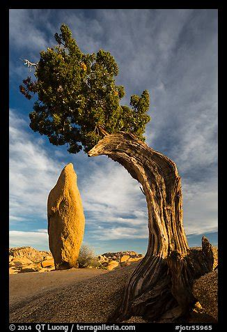 picturephoto balanced rock  leaning juniper jumbo