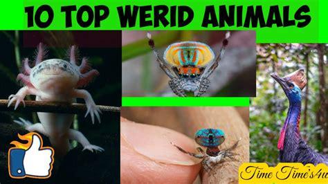 10 Top Weird Animals Strange Animals which Shocked you