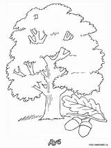 Tree Coloring Oak Pages Printable Trees Recommended sketch template