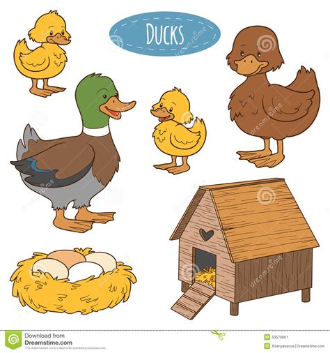 set  farm animals  objects vector family duck stock vector image