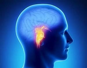 Brain Stem Stroke  Symptoms  Recovery  And Outlook