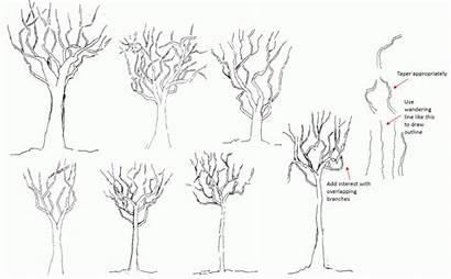 Outline Drawing Bare Trees Tree Ground Examples