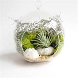bamboo fans adorable air plant terrarium ideas