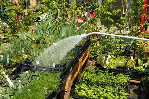 Lavendel Viel Wasser by Lavendel Gie 223 En 187 So Kalkulieren Sie Die Wassermenge Richtig