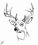 Deer Coloring Drawing Head Easy Elk Pages Skull Drawings Stag Antlers Draw Heads Printable Paintingvalley Face Getdrawings Sketch Whitetail Explore sketch template