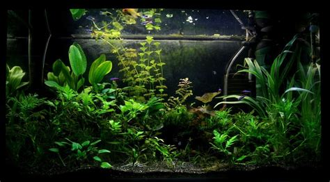 substrate  planted tank reviews buyers guide