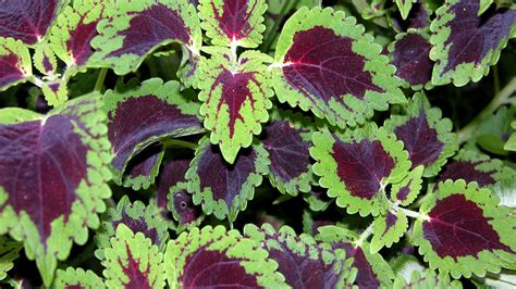 zone 10 plants list what to plant in the shade sunset