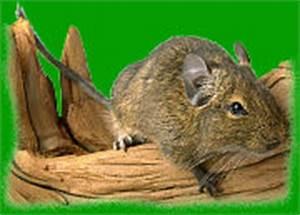 Spitzmäuse Im Garten : die monilia sporen verursachen gut sichtbare spuren ~ Lizthompson.info Haus und Dekorationen
