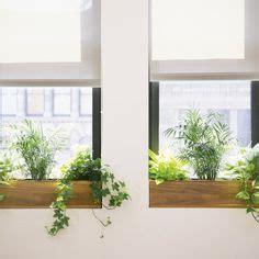 Best Indoor Window Sill Plants by 276 Best Office Plants Images Inside Garden Indoor