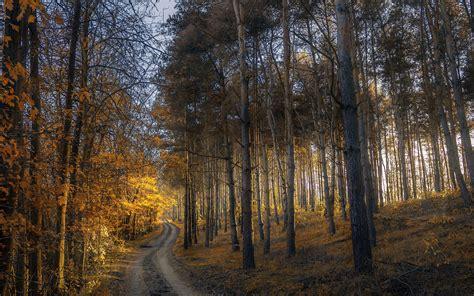sunlight  forest hd wallpaper autumn wallpaper hd hd