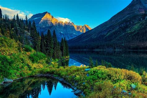 Beautiful Greenery Of Real Nature Scene Wallpaper Free