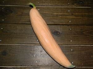 North Ga Candy Roaster What A Great Squash Heirloom