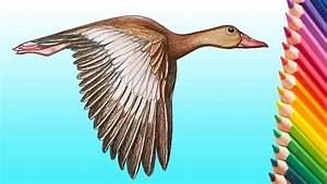 Learn How To Draw A Realistic Flying Duck Step By Step How