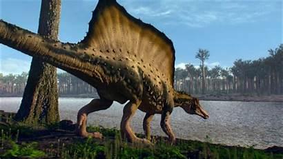 Spinosaurus Dinosaurier Rex Bigger Im Than Zeiten