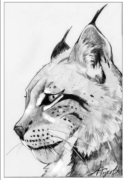 """The Outside Story: """"Return of the Missing Lynx"""" by Susan Shea. Illustration by Adelaide Tyrol"""