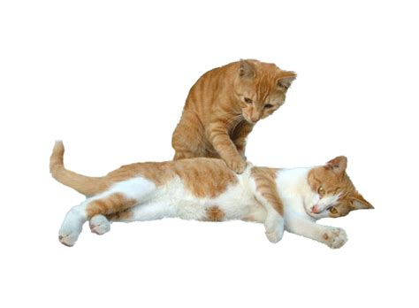 katzen gifs bilder katzen bilder katzen animationen