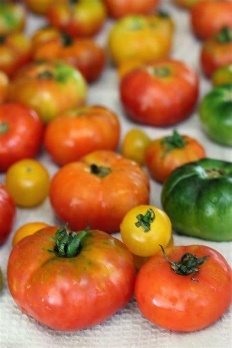 tomato chutney  idli dosa homemade spicy south