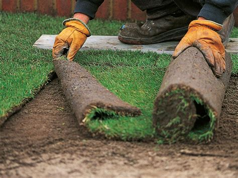 when to lay sod how to install sod how tos diy