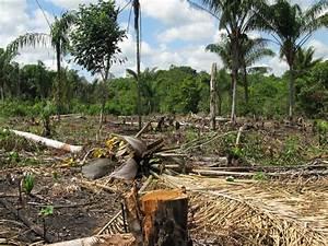 Amazon Deforestation Animals Affected | www.pixshark.com ...