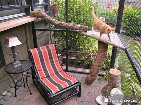 catio cat enclosure photo gallery catio spaces